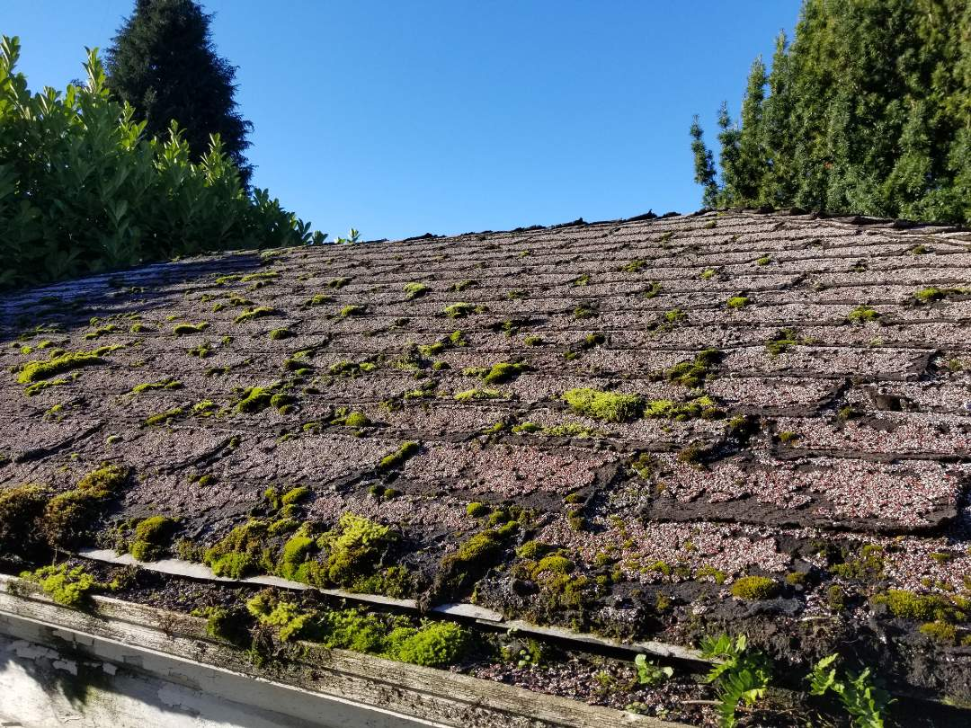 Seattle, WA - Working in Magnolia today. Doing a roof consultation with a great family. Call State Roofing for a free consultation today