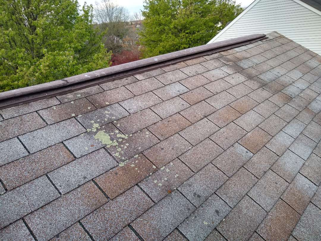 Warrenton, VA - Warrenton, VA - We are in Warrenton Virginia performing a roof inspection for a customer. These are the original shingles. There are signs of blistering and lichen ( a simple photosynthesizing organism, usually a green alga or cyanobacterium, surrounded by filaments of a fungus.) The GAF brand shingle has a 10 Year algae warranty for StainGuard-Labeled Shingles or Ridge Cap Shingles. #HillRoofing #WarrentonVARoofer #ManassasRoofer #NorthernVARoofer #FauquierCounty #RoofingCompany #RoofingNorthernVA #RoofingFairfaxVA #RoofingArlingtonVA #RoofingCentrevilleVA #Roofing #ContractorVirginia #ManassasRoofingContractor #NorthernVirginiaRoofer #RoofReplacement