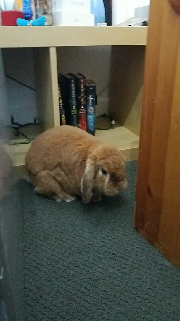 Salt Lake City, UT - We are here at this Salt Lake home finishing up some mold removal. This cute little bunny seems to have Rome of that house or at least the downstairs area to go where he pleases he's obviously a family pet.