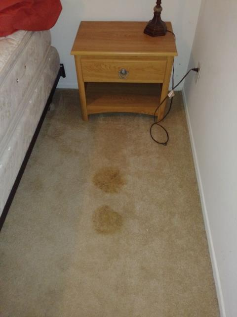 Lake Forest, CA - Water seeping through the carpet in the guest bedroom. Performed water mitigation and repair work