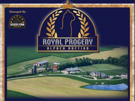 2019 ROYAL PROGENY ALPACA AUCTION :: Silver Penn Sales