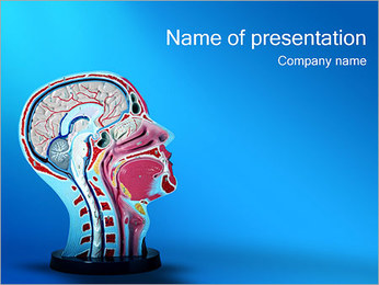 Head Model PowerPoint Template