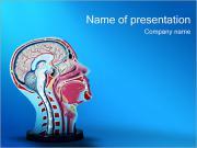 Head Model PowerPoint Templates