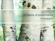 Birch Trees PowerPoint Templates