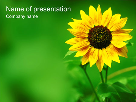 Sunflower PowerPoint Template & Backgrounds ID 0000000362 ...