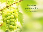 Grapes PowerPoint Templates