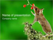 Mouse PowerPoint Templates