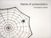 Örümcek ve Web PowerPoint sunum şablonları