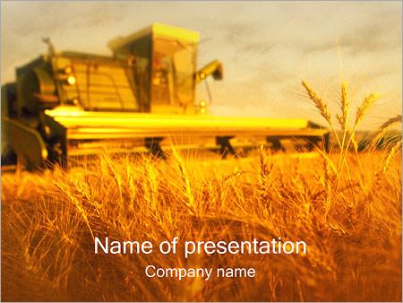 Champ de blé Modèles des présentations  PowerPoint