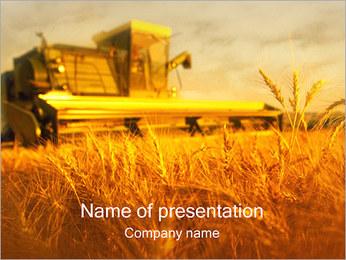 Pšeničné pole PowerPoint šablony