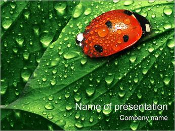 Lieveheersbeestje Sjablonen PowerPoint presentatie