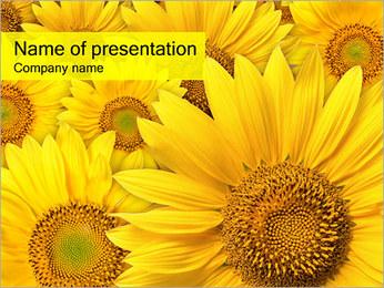 Tournesols Modèles des présentations  PowerPoint - Diapositives 1