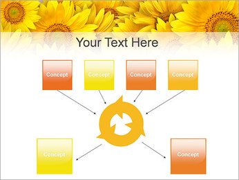 Tournesols Modèles des présentations  PowerPoint - Diapositives 10