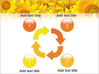 Tournesols Modèles des présentations  PowerPoint - Diapositives 14