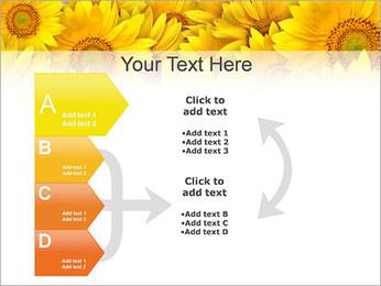 Tournesols Modèles des présentations  PowerPoint - Diapositives 16
