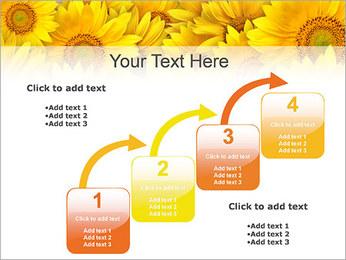 Tournesols Modèles des présentations  PowerPoint - Diapositives 20