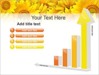 Tournesols Modèles des présentations  PowerPoint - Diapositives 6