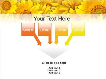 Tournesols Modèles des présentations  PowerPoint - Diapositives 8