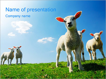 Lambs PowerPoint Template
