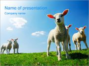 Lambs PowerPoint presentationsmallar