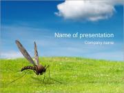 Zanzara I pattern delle presentazioni del PowerPoint