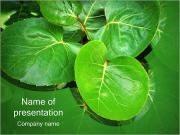 Зеленые лепестки Шаблоны презентаций PowerPoint
