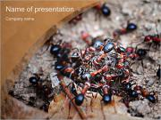 Ants PowerPoint Templates