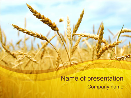 Agriculture powerpoint templates backgrounds google slides themes wheat powerpoint template toneelgroepblik