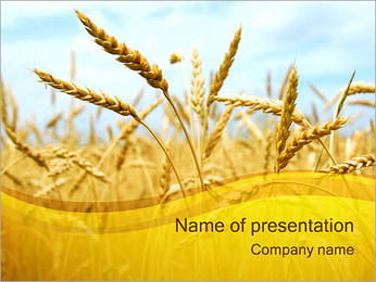 Wheat PowerPoint Template