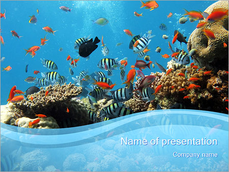 Coral Reef PowerPoint Template & Backgrounds ID 0000001006 ...