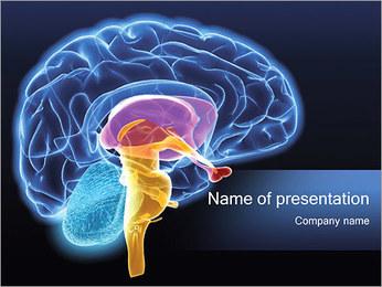 Cérebro Humano Modelos de apresentações PowerPoint