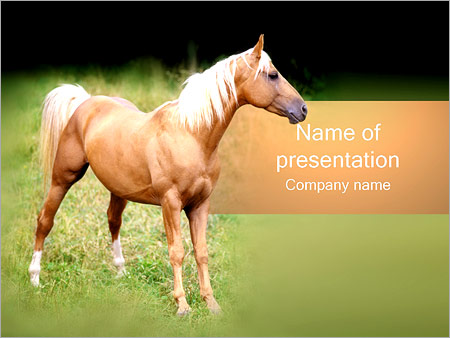 Horse Powerpoint Template Backgrounds Google Slides Id
