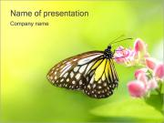 Butterfly on Flower PowerPoint Templates