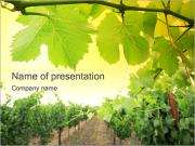 Vineyard PowerPoint presentationsmallar