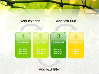 Vignoble Modèles des présentations  PowerPoint - Diapositives 11