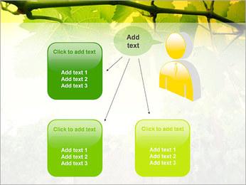 Vignoble Modèles des présentations  PowerPoint - Diapositives 12