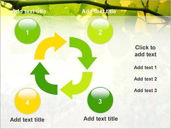 Vignoble Modèles des présentations  PowerPoint - Diapositives 14