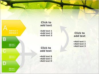 Vignoble Modèles des présentations  PowerPoint - Diapositives 16