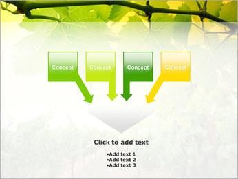 Vignoble Modèles des présentations  PowerPoint - Diapositives 8