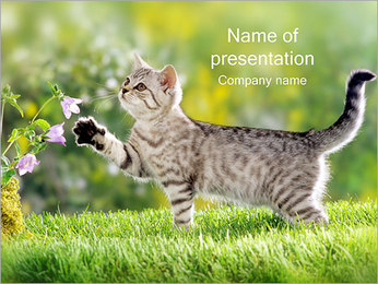 Cat on Grass PowerPoint Template
