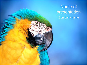 Parrot PowerPoint Template