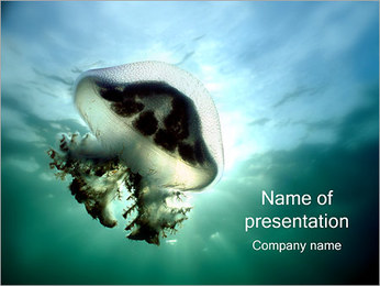 Jellyfish PowerPoint Template