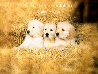 Puppy in Hay PowerPoint Template