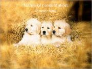 Puppy in Hay PowerPoint Templates