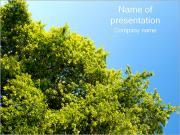 Зеленые листья Шаблоны презентаций PowerPoint