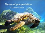 Turtle PowerPoint Templates