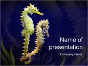 Horse Sea PowerPoint Templates