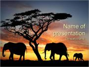 Silhouettes of Elephants PowerPoint Templates