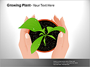 Growing Plant PPT Diagrams & Chart