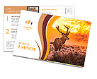 Red Deer in Morning Sun. Postcard Templates